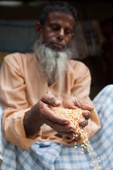 Improved grain storage in Bangladesh (CIMMYT) Tags: man person persona store asia technology hand wheat grain storage