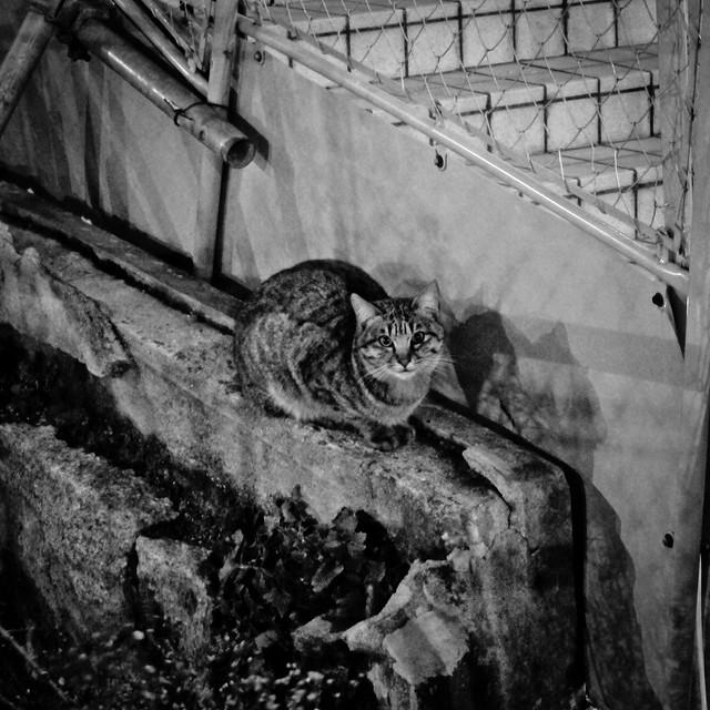 Today's Cat@2012-02-29