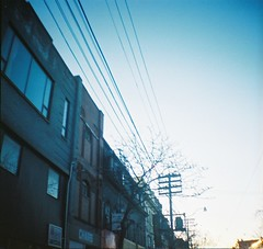 late afternoon walk with telephone wires (jill blackmore) Tags: toronto telephonewires skylomographydianamini