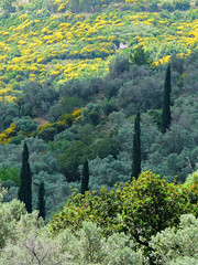 different green (duqueros) Tags: plants tree green nature landscape island natur pflanzen insel greece grn griechenland landschaft baum samos duqueiros