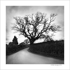 Roadside Tree (Mike. Spriggs) Tags: blackandwhite bw tree dorset