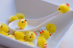Chicken Soup (Michele D. Lee) Tags: chickens chicken soup bowl chicks chickensoup