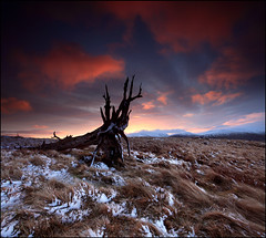 East Mealour Dawn (angus clyne) Tags: morning winter light red cloud snow storm cold tree ice grass yellow pine forest photoshop crust dead fire dawn scotland frost glow purple wind time perthshire scottish glen tay highl