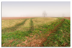 Three trees (Del.Higgins) Tags: morning trees tractor green grass fog del corner foggy story dell palenville greene storys delhiggins foggymorning3