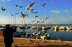 29LAZISE ITALY (antoniorenzo) Tags: people italy seagulls lake water birds landscape lago boat garda italia nuvole paisaje barche persone uccelli cielo di paysage acqua landschaft colori gabbiani 風景 paesaggio lazise