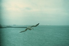Viey (Lighthouse Keeperess) Tags: film 35mm island iceland reykjavik analogue sland videy viey
