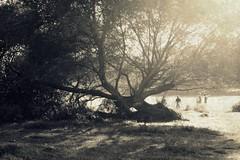 era d'estate tanto tempo fa (.taz.) Tags: parco rome roma tree albero caffarella abbattereglialbericheintralcianolenostrefotomissionpossible