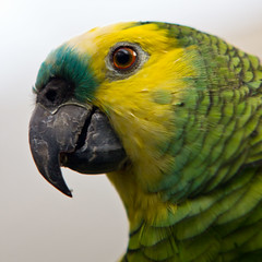 Nature forms (totistar) Tags: textura nature parrot pico bec loro papagayo papagai butterflypark parrotsbeak natureforms