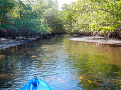 Kayaking Through Mangroves (davalt10) Tags: kayak florida mangrove bocaraton