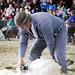 Sheep Shearing Demonstration!