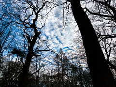 Blue, white and black [Explored #123] (Jawad - busy then away!) Tags: blue trees white black tree forest woods sheffield explore s100 ecclesallwoods canons100 canonpowershots100