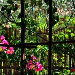 Jardins de Bagatelle (fiumeazzurro) Tags: sicilia bellissima aplusphoto flickraward lamiciziafaladifferenza anthologyofbeauty theauthorsplaza thegalleryofflowerseffe authorsclub sicilia2011