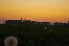 meadow (danelol) Tags: blowball maedow dandlelion