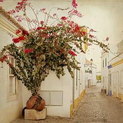 cozy corner... (..Ania.) Tags: street portugal broken corner faro spring bougainvillea flowerpot oldtown textured cozycorner floweringbush brokenflowerpot