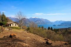 In Vista del Lario (Roveclimb) Tags: mountain alps trekking alpi montagna comolake lagodicomo lario escursionismo breglia sanagra sentierodellequattrovalli viertalerweg