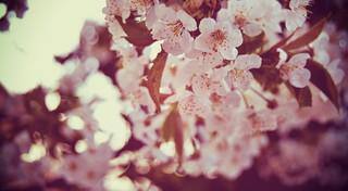 Maybe spring