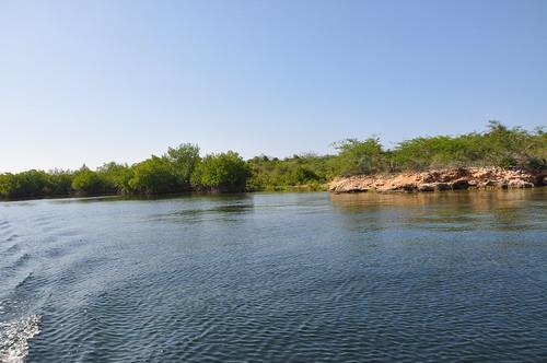 Mangrove área