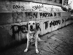 I've got a message for you (dangeri.) Tags: street portrait blackandwhite graffiti streetphotography explore dee doc streetshot citypics musetto itsasign explored forallourflickrfriends heismylove miocucciolo heismyangel ibelieveinsigns ourdailylife myyellowlabrador ldlportraits highqualitydogs ldlnoir