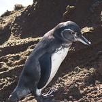 """BIO 245: Ecology of Ecuador<a href=""""http://farm8.static.flickr.com/7177/7142161985_b5105201c9_o.jpg"""" title=""""High res"""">∝</a>"""