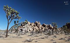 Joshua Tree National Park (zeesstof) Tags: california park travel tree tourism nationalpark desert joshuatree tourist granite geology joshuatreenationalpark zeesstof