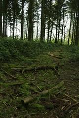 Exploring The Forest (HennerzB) Tags: blue light sunlight nature up vertical bells forest canon landscape eos baker close low adventure henry 700d hennerzphotos
