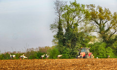 IMG_8822 (pinktigger) Tags: italy tractor field countryside italia country plowing storks fagagna cicogne friul aratura feagne