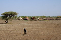 2016 006 Afar02 (ngari.norway) Tags: people drought ethiopia afar africatravelphotography afaripeople