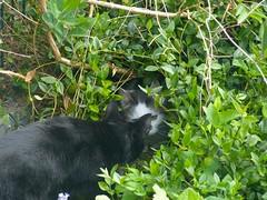 The Cave I (frankbehrens) Tags: cats tom cat chats chat gatos gato katze katzen kater
