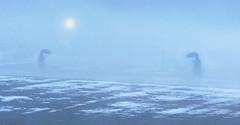 Galerie-Neu (Markus Koepf) Tags: schnee nebel kunst landschaft regen wetter diashow schirm schneereste schmuckbild
