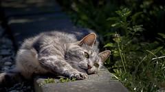 Sunbathing (Strange Artifact) Tags: digital cat garden ed kat olympus ii nina 75300mm sunbathing markii em10 mzuiko f4867