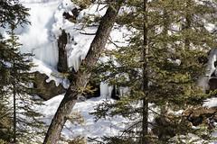 Icicles, Johnston Canyon, Banff, Alberta (Jim 03) Tags: blue lake snow mountains ice wall creek river melting path turquoise jim canyon louise covered alberta bow banff icicles johnston jimhoffman jhoffman jim03 wwwflickrcomphotosjhoffman2013 wwwjimahoffmancom