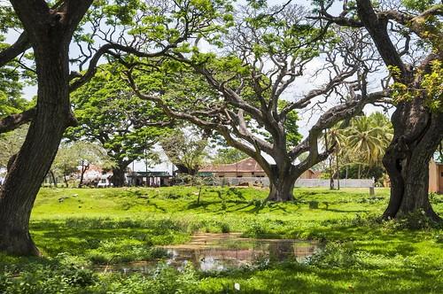 anuradhapura - sri lanka 39