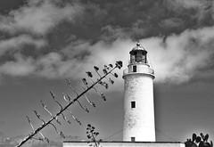 lighthouse attraction (jrblanco53) Tags: lighthouse tree faro formentera