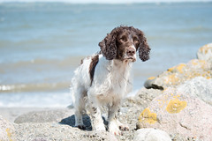 FAN_5514.jpg (Flemming Andersen) Tags: dogs water denmark seaside spring hund dk hurup nykbingmors northdenmarkregion