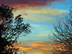 29Apr16 Sunset Tree Gap2 (Daisy Waring World) Tags: tree clouds gold branches 4 torquoise