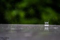Raindrop impact (Tom.T.Bone) Tags: black green rain canon eos dof bokeh l 40 grn 70200 f4 schwarz regen raindrop iso1600 f40 70200mm 200mm regentropfen fuzziness unschrfe apsc 700d