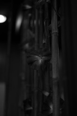 artificial flowers (Okera) Tags: 50mm summilux 2016   r1filter mmonochrom magnifierm14x