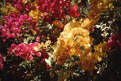 Lanzarote June 2016 (cwalphoto) Tags: photography lanzarote texas rancho animals nature sea holiday travel canaryislands canon flower tourist 700d