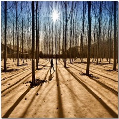 Natural lines (Nespyxel) Tags: wood trees winter light snow nature lines alberi backlight walking woods alone shadows natura ombre walker neve inverno luce controluce bosco geometrie linee skgur geometries cervaradiroma nespyxel stefanoscarselli
