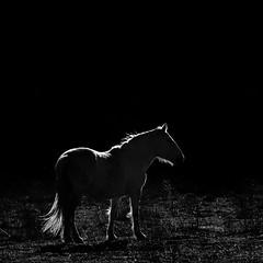 . (Color-de-la-vida) Tags: horse caballo cheval carmargue aiguesvives colordelavida louchivauprovençal