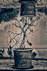Entwined (Asmaa H.) Tags: trees plants plant abstract tree composite composition twine entwine entwined overlap overlapping overlaps twines