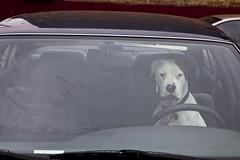 (Brock Brake) Tags: dog yo