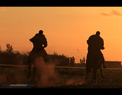 Sunset Knight Benghazi ( [ Libya Photographer ]) Tags: sunset bird birds canon eos sigma os 7d knight mm 1855 libya dg benghazi 70300   f456