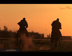 Sunset Knight Benghazi (العقوري [ Libya Photographer ]) Tags: sunset bird birds canon eos sigma os 7d knight mm 1855 libya dg benghazi 70300 فارس جواد f456 حصان خيل احصنه خيول فرسان بنغازي الثورة مهد بنغازى الشرارة الشراره