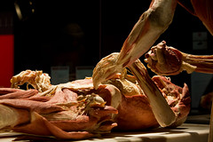 Body Worlds (AnkaranoHC) Tags: mostra roma body worlds bodyworlds plastination plastinazione