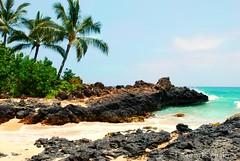 Makena Cove (Love, Knot) Tags: ocean tree beach paradise cove maui palm tropical makena