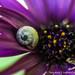35. Snail, flower and bokeh