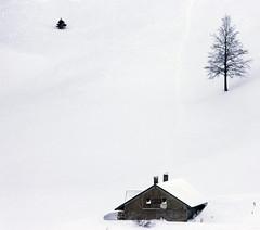 Chalet du Croue (Mathieu GUY) Tags: winter house snow hiver jura neige maison sapin sapins