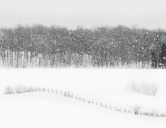 De la neige plein les yeux. Snow eyeful (Amiela40) Tags: snowflake snow eyes atmosphere blurred yeux vision neige sensation ambiance floconsdeneige treesdiestandingup brouiller