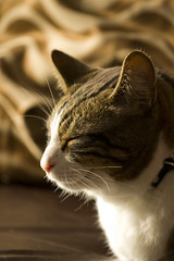 Yoda (TomLiaPhotography) Tags: pets cat canon sleep relaxing sofa 70200l